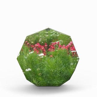 Récompense De fleurs roses de nature herbe florale et