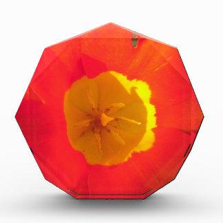 Récompense Fleur ouverte de tulipe de rouge et de jaune