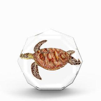 Récompense Green turtle - Tortue verte Chelonia mydas