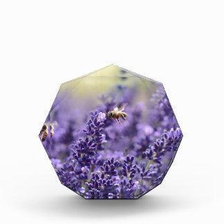 Récompense Lavande de ressort avec floral pourpre d'abeilles