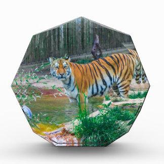 Récompense Tigre