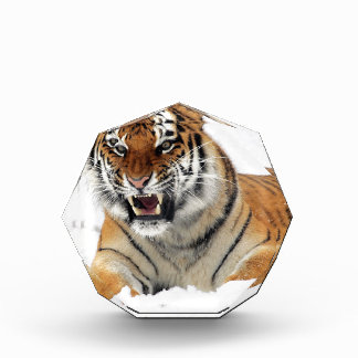 Récompense Tigre dans la neige