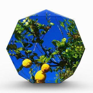 Récompense Trois citrons siciliens