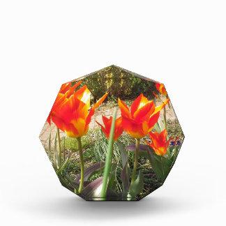 Récompense Tulipes rouges et jaunes