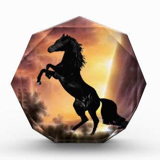 Récompense Un élevage frison de cheval d'étalon