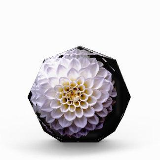 Récompenses En Acrylique art de conception florale