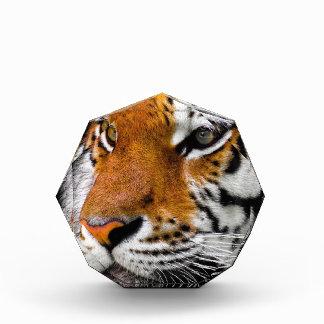 Récompenses En Acrylique Dangereux prédateur animal d'Amurtiger de chat de
