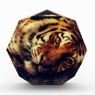Récompenses En Acrylique Faune animale de tigre reposant le macro plan