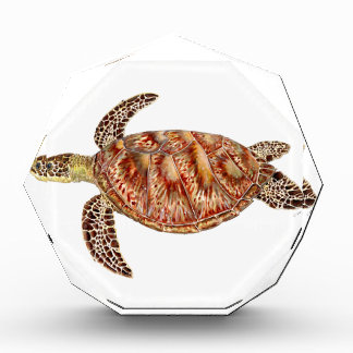 Récompenses En Acrylique Green turtle - Tortue verte Chelonia mydas