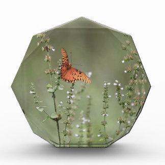 Récompenses En Acrylique Papillon de fritillaire de Golfe