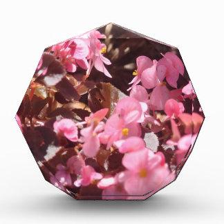 Récompenses En Acrylique produits floraux