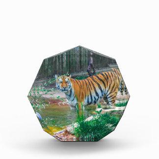 Récompenses En Acrylique Tigre