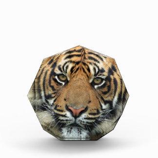 Récompenses En Acrylique Tigre adulte