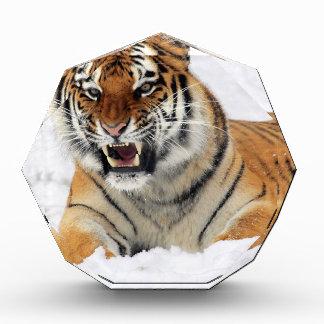 Récompenses En Acrylique Tigre dans la neige