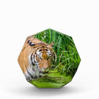 Récompenses En Acrylique Tigre sibérien