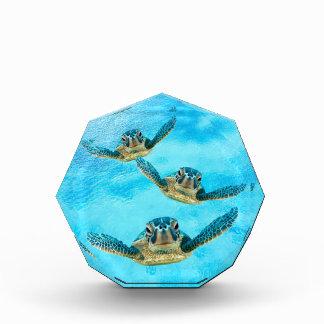 Récompenses En Acrylique Trois tortues de mer de bébé nageant
