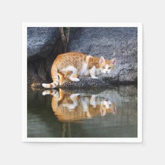 Réflexion de chat en photo drôle //de chaton de serviettes en papier