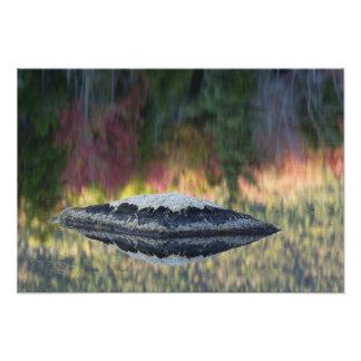 Réflexion de roche et d'arbre, étang de lis, blanc  tirage photo