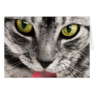 Regard de chat carte de vœux