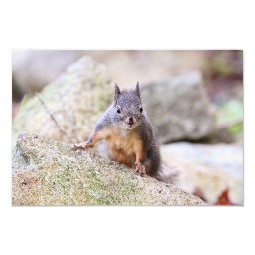 Regarder mignon d'écureuil impression photographique
