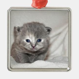 Regardez ce petit chaton gris ornement carré argenté