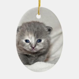Regardez ce petit chaton gris ornement ovale en céramique