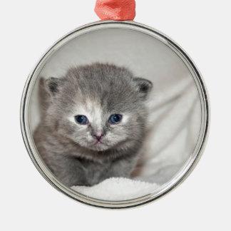 Regardez ce petit chaton gris ornement rond argenté