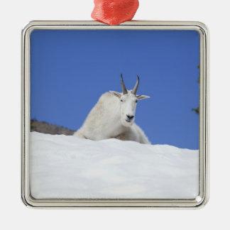 Région de lac Ingalls, chèvre de Billy sur la Ornement Carré Argenté