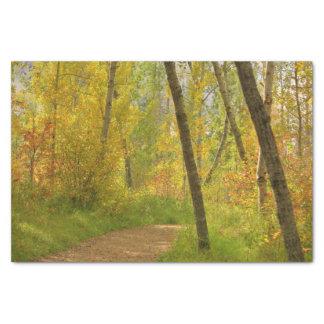 Régions boisées d'automne papier mousseline