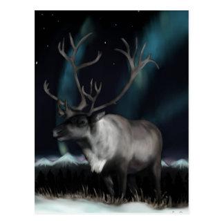 Reinedeer de la carte postale de lumières du nord