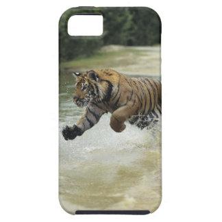 Remplissage de tigre de Bengale (Panthera le Tigre Étui iPhone 5