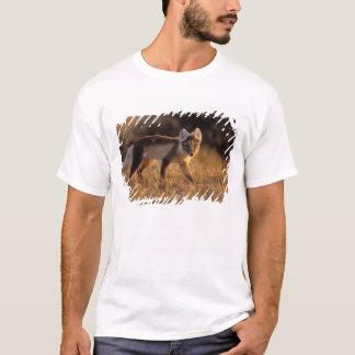 renard arctique, lagopus d'Alopex, manteau T-shirt