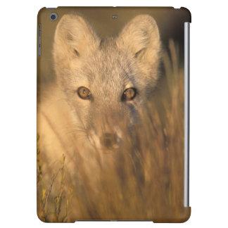 renard arctique, lagopus d'Alopex, sur les 1002 2