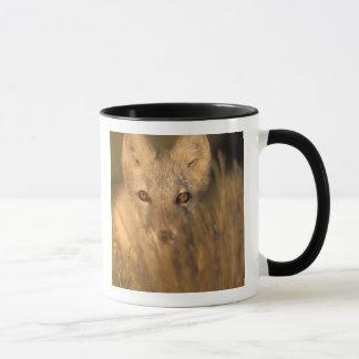 renard arctique, lagopus d'Alopex, sur les 1002 2 Mug
