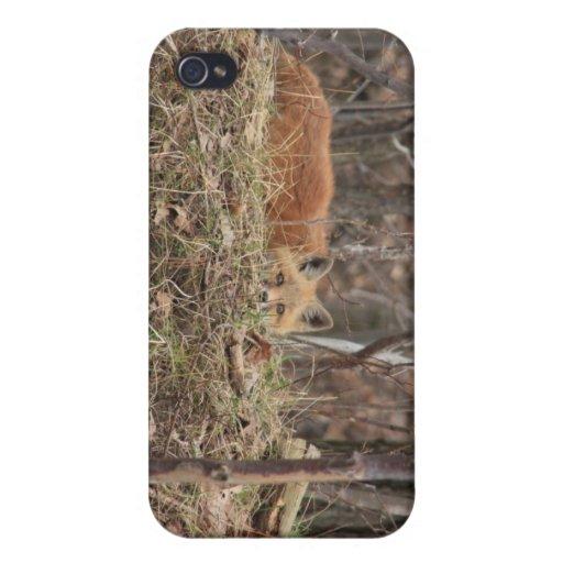 renard de bébé coques iPhone 4/4S