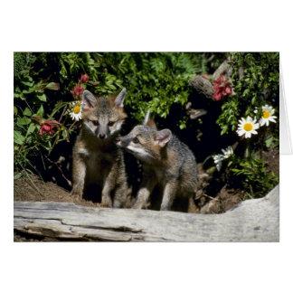 Renard-jeunes kits gris au repaire carte de vœux