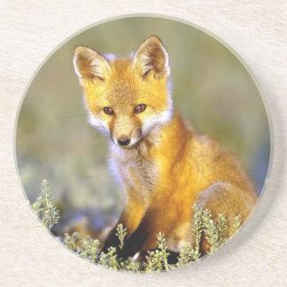 renard rouge de petit bébé mignon dessous de verre en grès