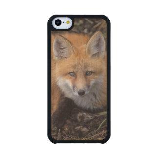 renard rouge, vulpes de Vulpes, dans des couleurs Coque iPhone 5C En Érable