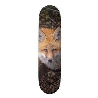 renard rouge, vulpes de Vulpes, dans des couleurs Skateboard Old School 18,1 Cm