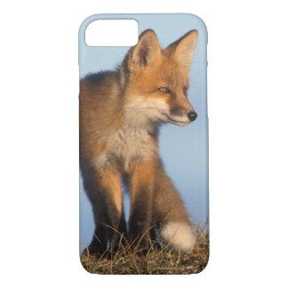 renard rouge, vulpes de Vulpes, dans les 1002 Coque iPhone 7