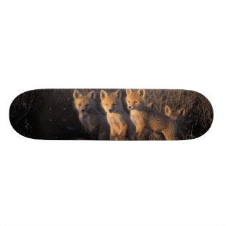 renard rouge, vulpes de Vulpes, kits en dehors de  Plateaux De Skate