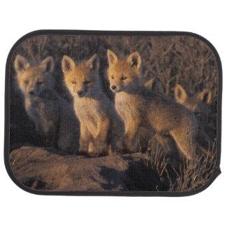 renard rouge, vulpes de Vulpes, kits en dehors de  Tapis De Voiture