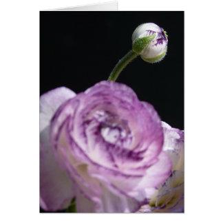 Renoncule persane blanche d'asiaticus de carte de vœux