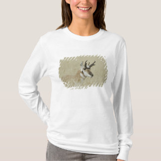 Repos masculin de Pronghorn, Yellowstone NP, T-shirt