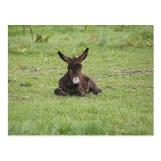 Repos sur l'herbe carte postale