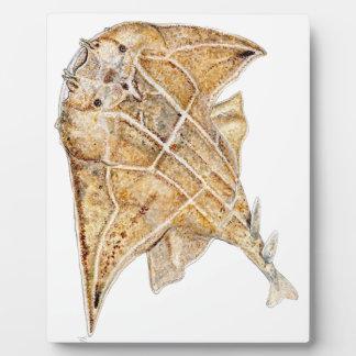 Requin ange, angelote plaque d'affichage
