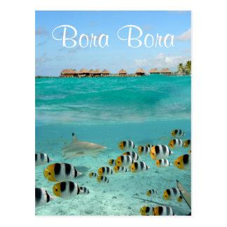 Requin chassant des poissons en carte postale des