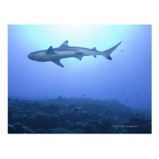 Requin dans l'océan, vue d'angle faible carte postale