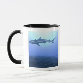 Requin dans l'océan, vue d'angle faible tasses