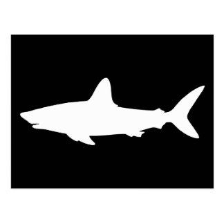 Requin de natation cartes postales
